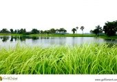 vietnam-golfcourse-heron-lake-golf-course-resort-04