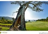 vietnam-golfcourse-the-dalat-at-1200-country-club-05