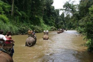 5-one-day-safari-elephant-trekking-bamboo-rafting-chiang-mai-tour-4